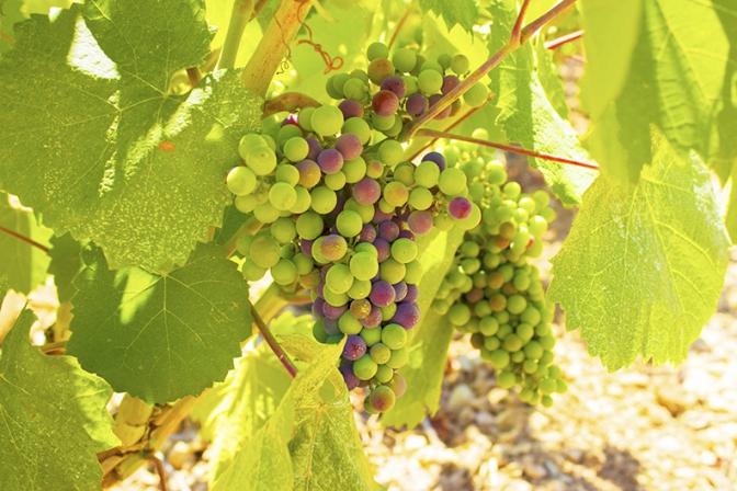 サステナビリティに必要な4原則、ワイン好きの立場から