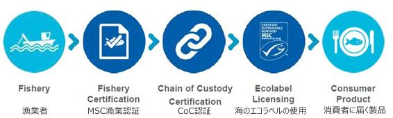 MSC認証の流れ