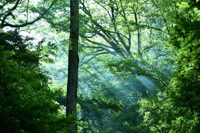「責任ある選択」は社員のエンゲージメントにも好影響!_FSC®森林認証とは②