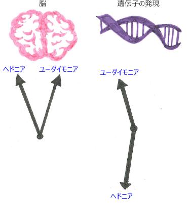 幸せの種類による、脳と遺伝子への影響
