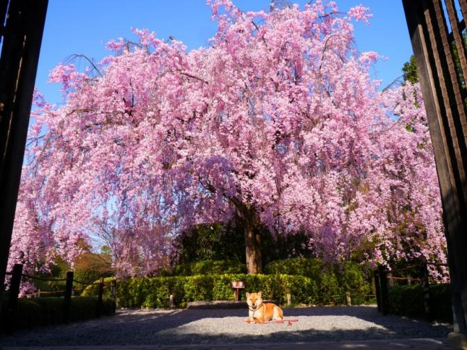 妙心寺退蔵院副住職松山大耕さんに教えて頂いた、禅とリーダーシップ