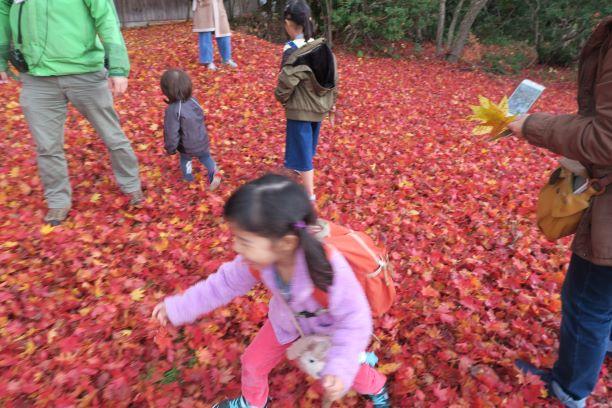 小岩井農場の紅葉