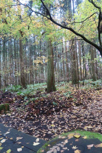 小岩井農場の明るい森林