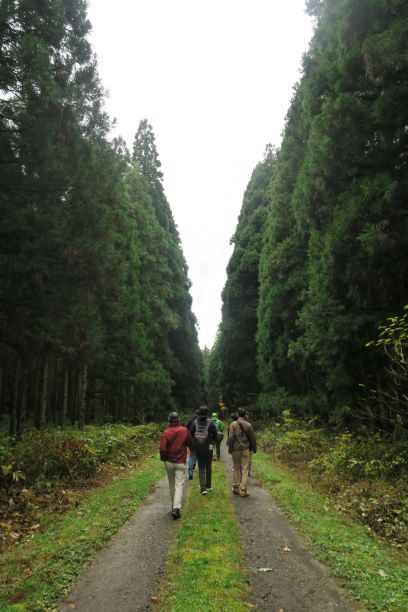 小岩井農場100年の森
