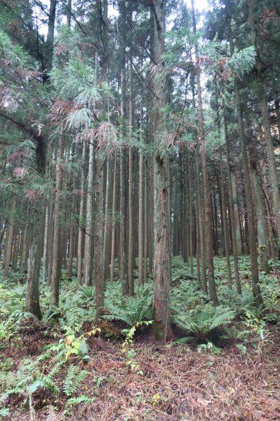 小岩井農場の森林、土壌